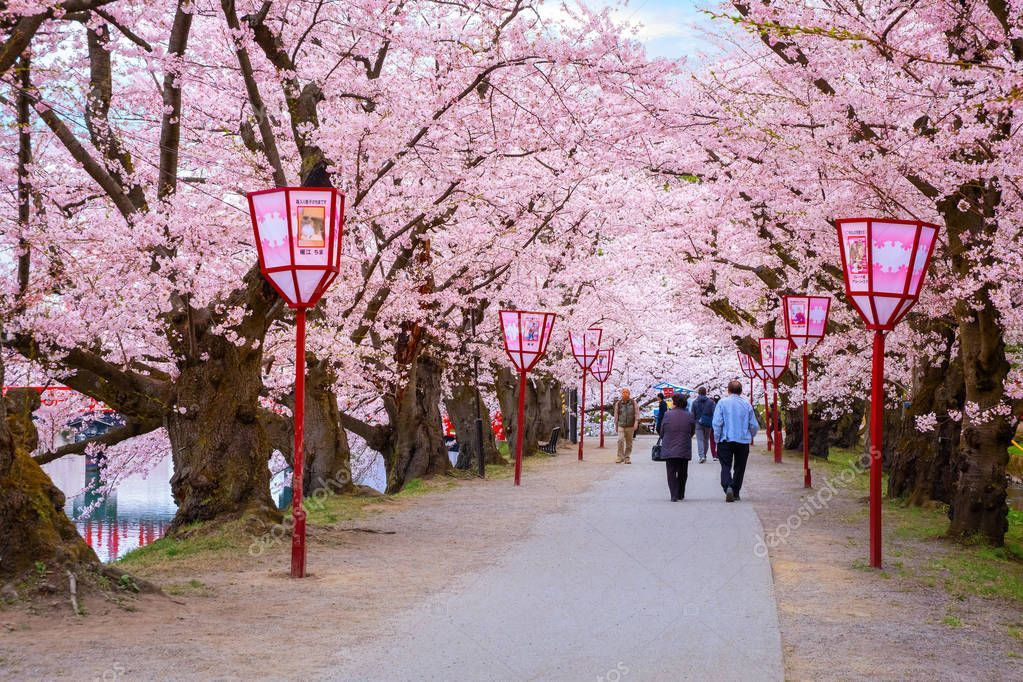 Sakura Japan April Japan Photography Aesthetic Japan Cherry Blossom Japan