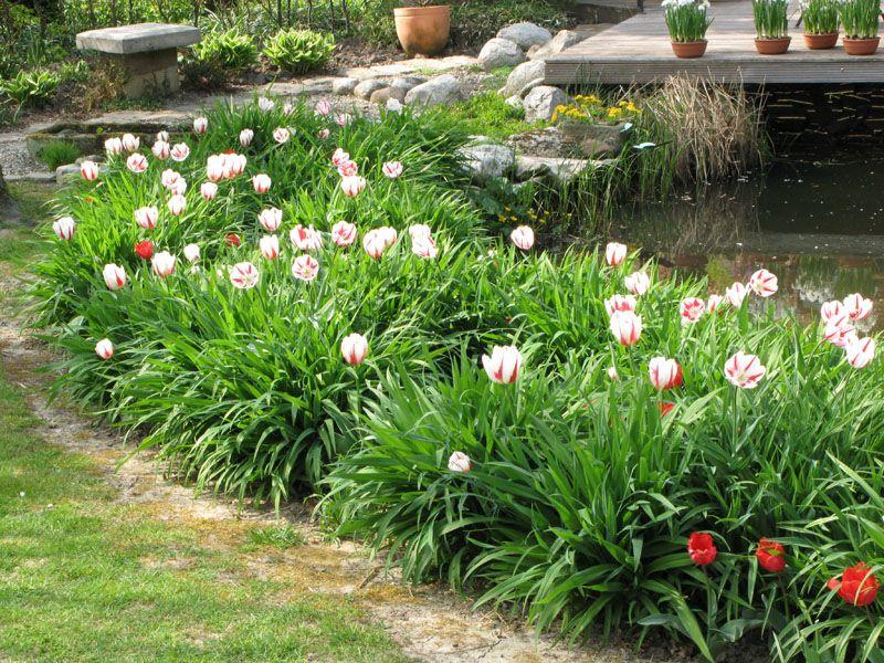 Ideal Tulpen und Taglilien Mein sch ner Garten