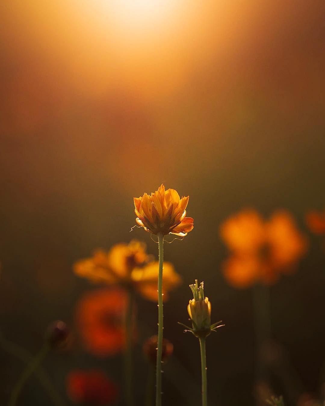 Nature Beautiful Flowers Nature Photography Flower Power