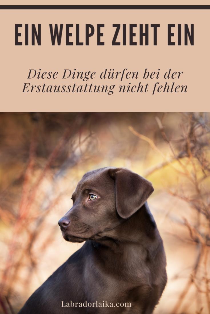 Hunde I Erstausstattung Fur Einen Welpen In 2020 Welpen Hundewelpen Welpen Mischlinge