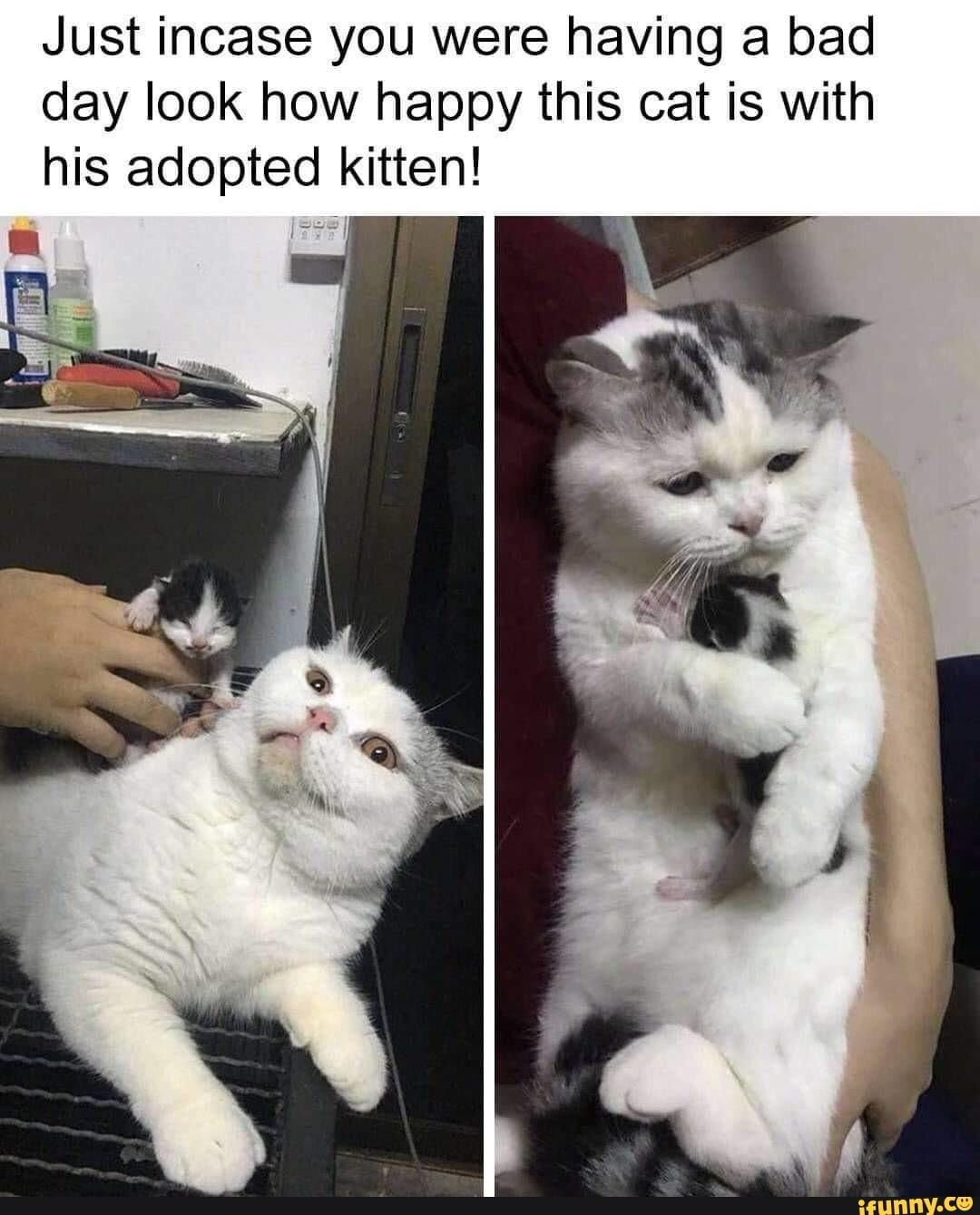 Just Incase You Were Having A Bad Day Look How Happy This Cat Is With His Adopted Kitten Ifunny Cute Baby Animals Cute Animals Cute Funny Animals