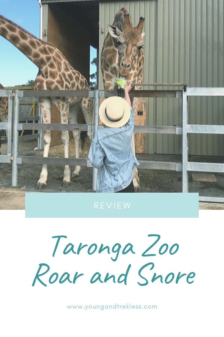 Review Taronga Zoo Roar And Snore Snoring Roar Zoo