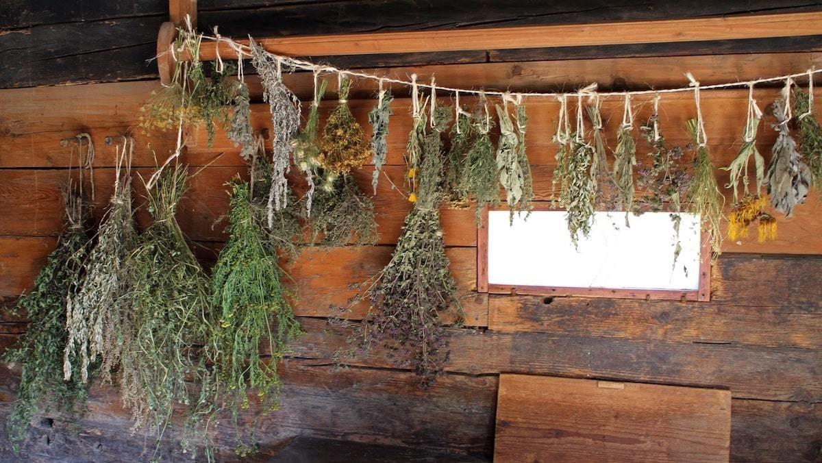 Cómo Secar Las Hierbas De Olor Cuatro Técnicas Que Debes Conocer Secado De Hierbas Hierbas De Olor Plantas Medicinales