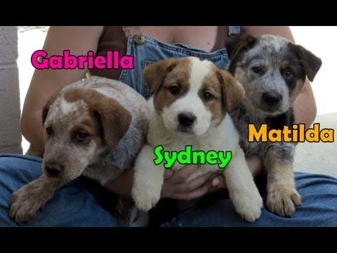 Dog Rescue In Central California Gaia Sydney Matilda Gabriella Hope For Paws On Youtube With Images Rescue Dogs Rescue Puppies Paws Rescue