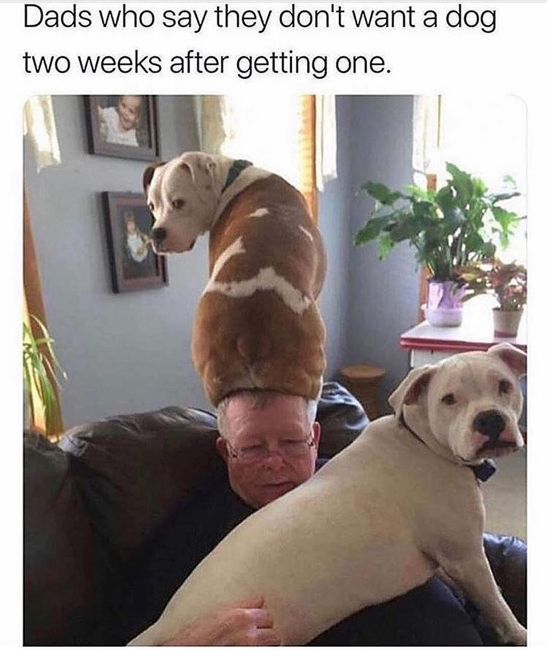 Photo of Dog Memes Of The Day 32 Pics – Ep44 #dogs #dogmemes #lovelyanimalsworld – Lovely Animals World
