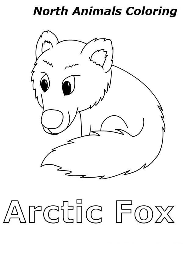 Arctic Animals Arctic Fox Is Arctic Animals Coloring Page