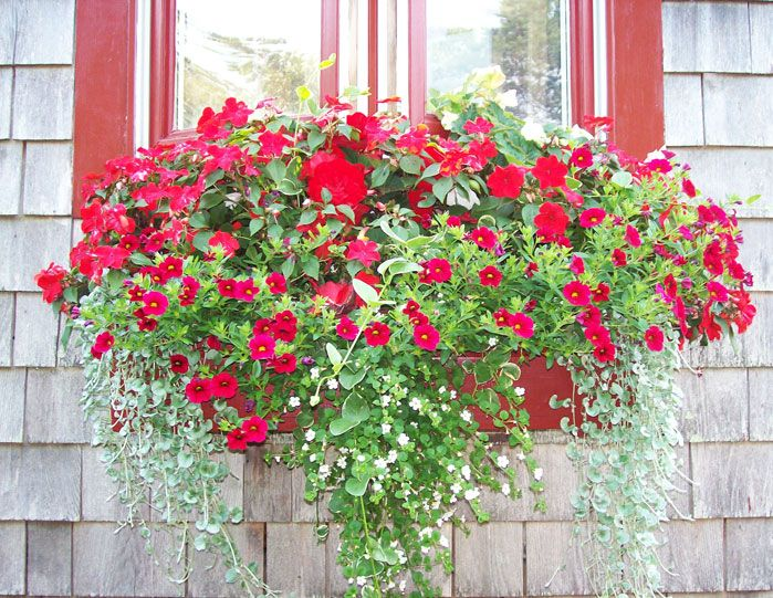 Cape Cod Window Box Window Box Flowers Cape Cod Window Box Window Boxes