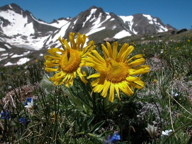 Animals that live in the arctic in a surprise finding researchers arctic tundra plants with names mightylinksfo