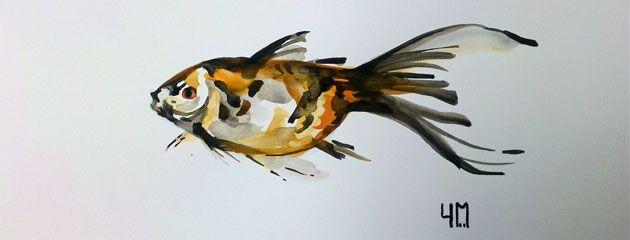 Poisson rouge images croquis et art - Croquis poisson ...