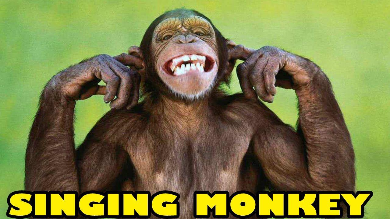 Monkey Singing Happy Birthday Song Funny – Funny Monkey Birthday Cards