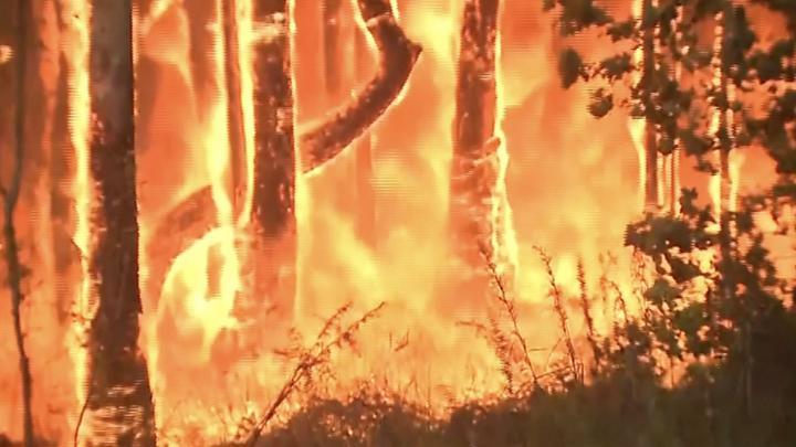 Australian bushfires reach Sydney's suburbs in 2020 (With