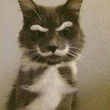 Eyebrows and mustache cat from Google
