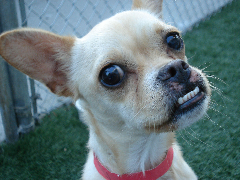 Dogs with underbites