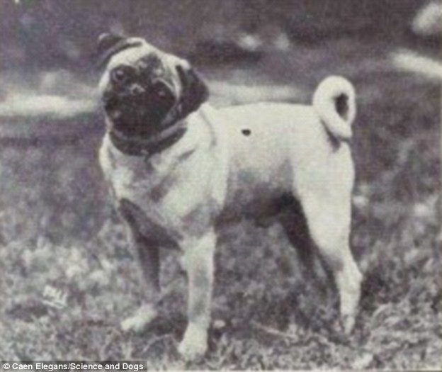 How Humans Bred Some Dogs To Be Unrecognizable From Their
