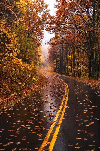 West Virginia Fall Road Photo by Michael Matti