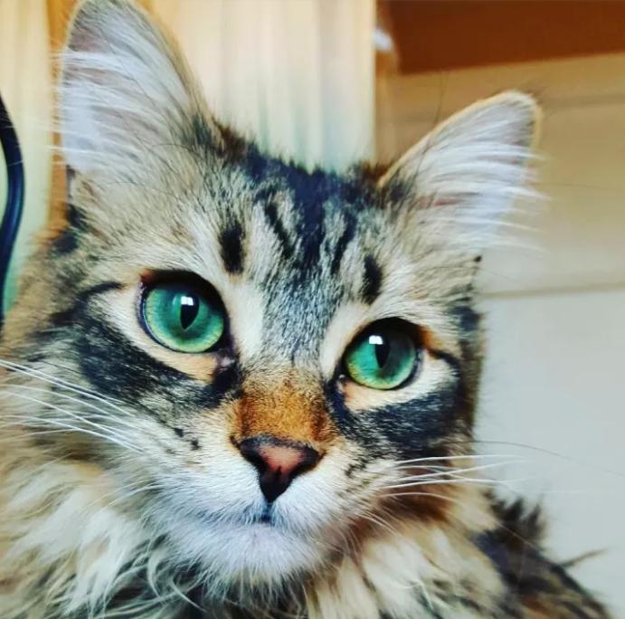 True Green Cat Eyes - Aluring.