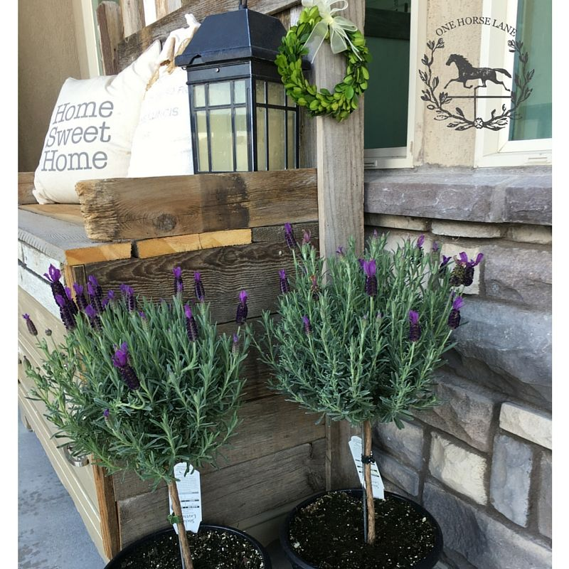 57 Amazing Beautiful Garden Ideas Inspiration And: Potting A Successful Lavender Topiary