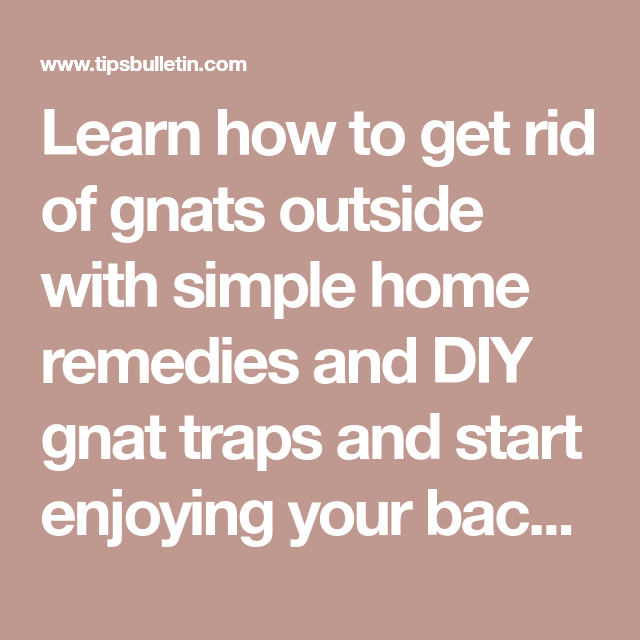 How to Get Rid of Gnats Outside in 2020   How to get rid ...