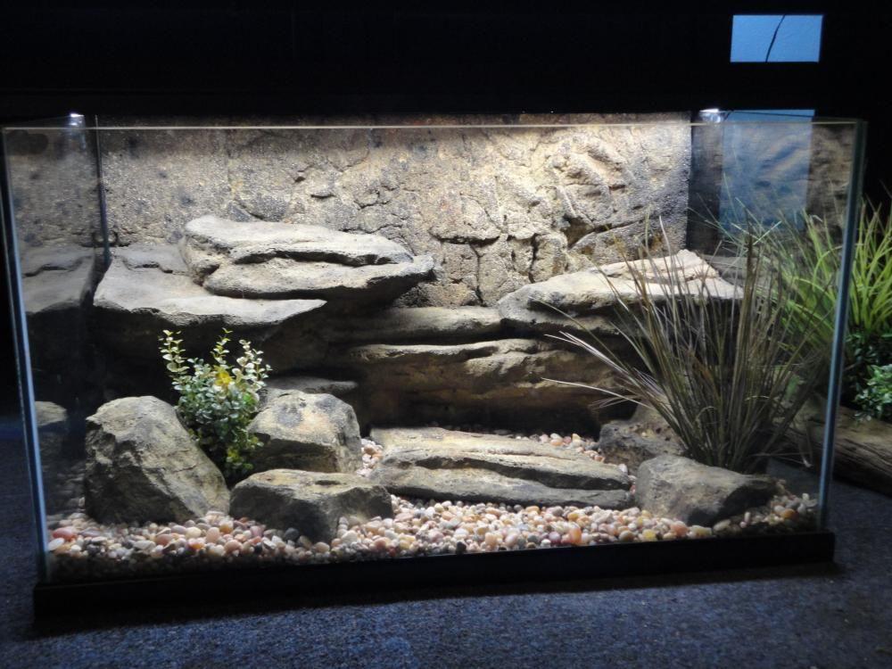 Aquatic Turtle Tank Puckk Pinterest Rocks Leopards