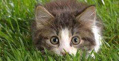 Come tenere lontani i gatti dai vasi e dalle piante