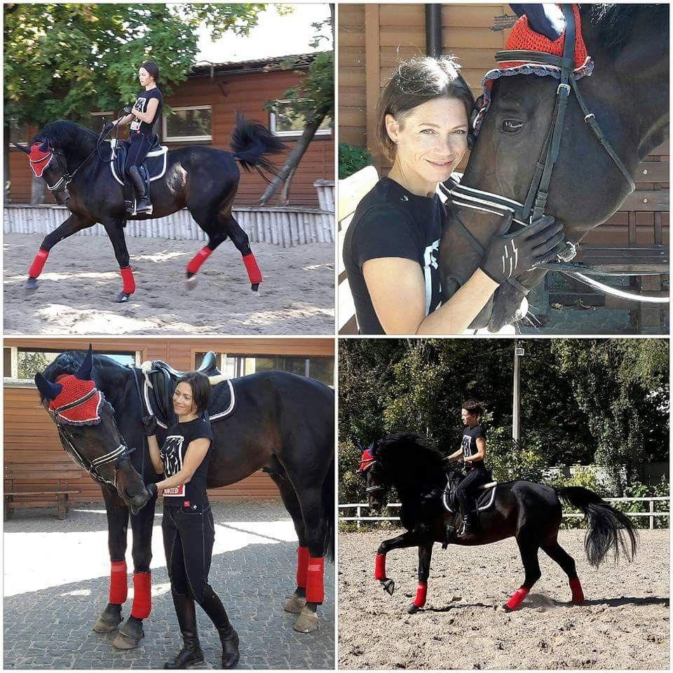 Dressage in Ukrain. Dressage Ukrain stallion. Dressage training.