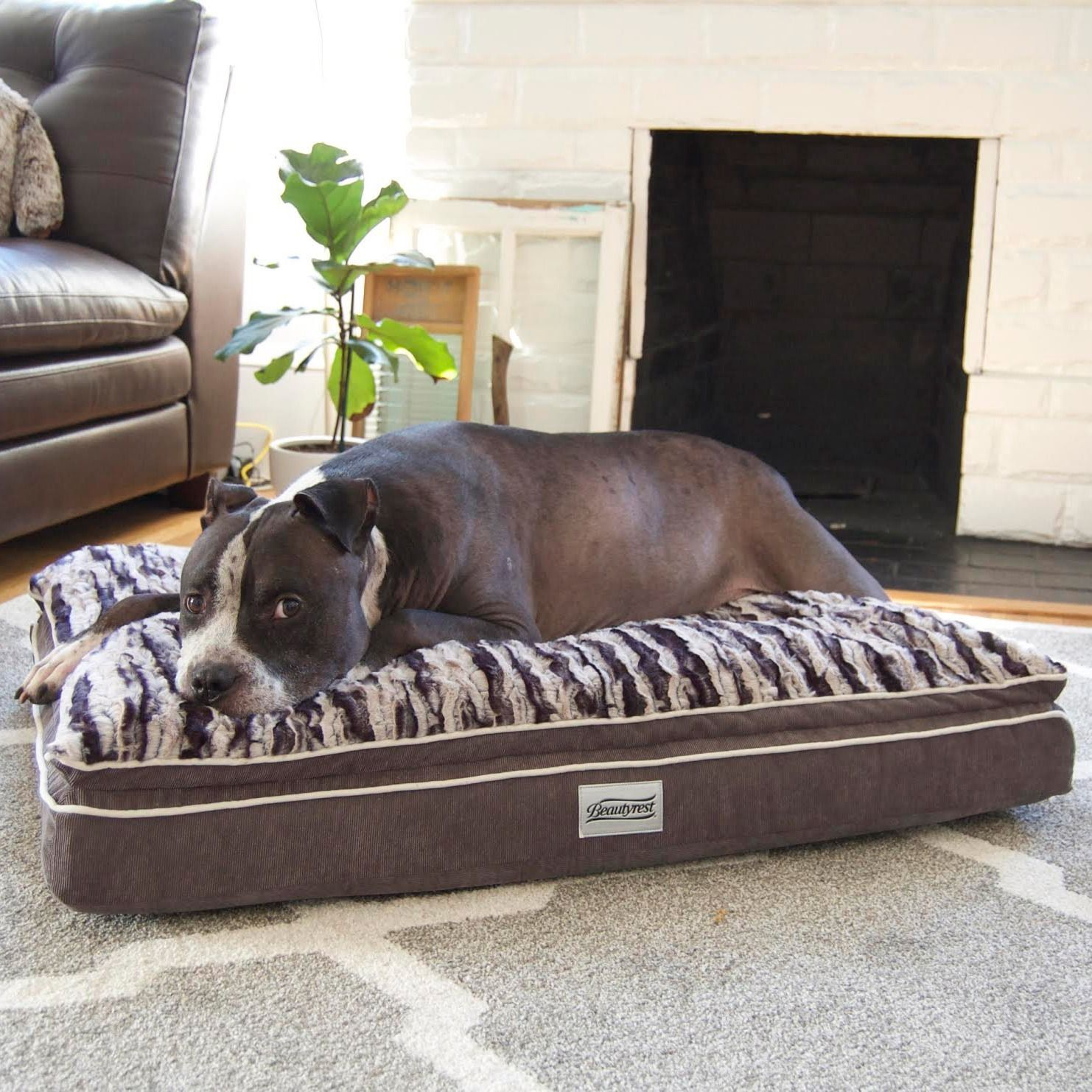 the simmons beautyrest luxe mat plus rectangle dog bed features a