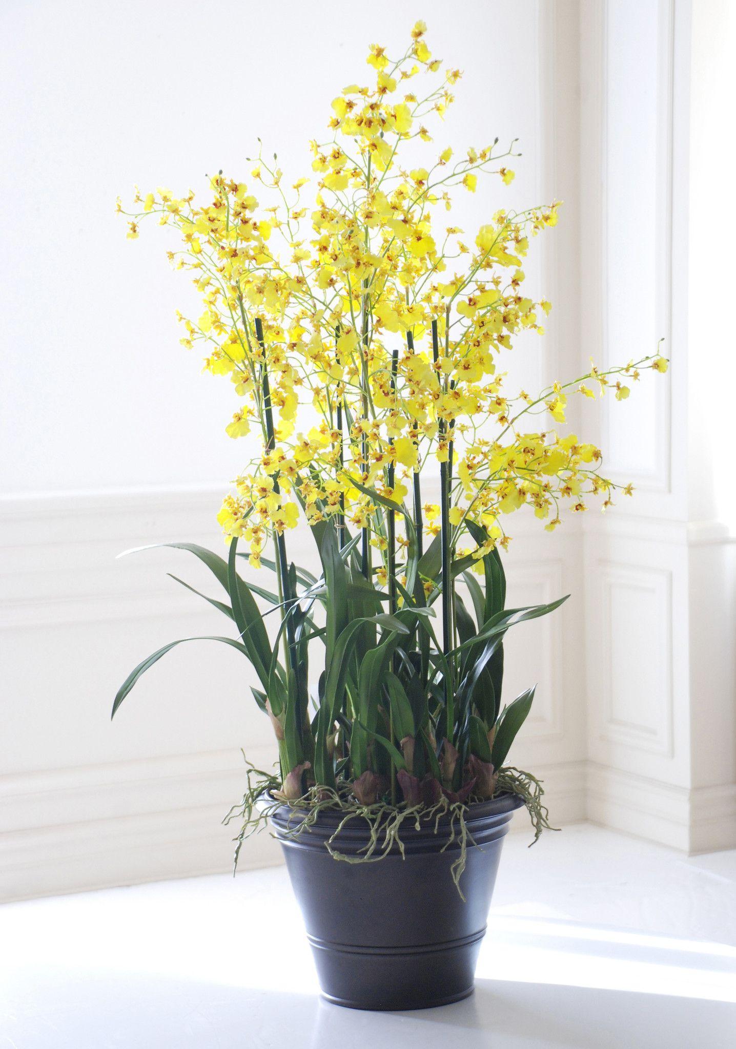 Yellow Dancing Oncidium Orchids Ideias De Jardinagem Orquideas Cymbidium Orquideas