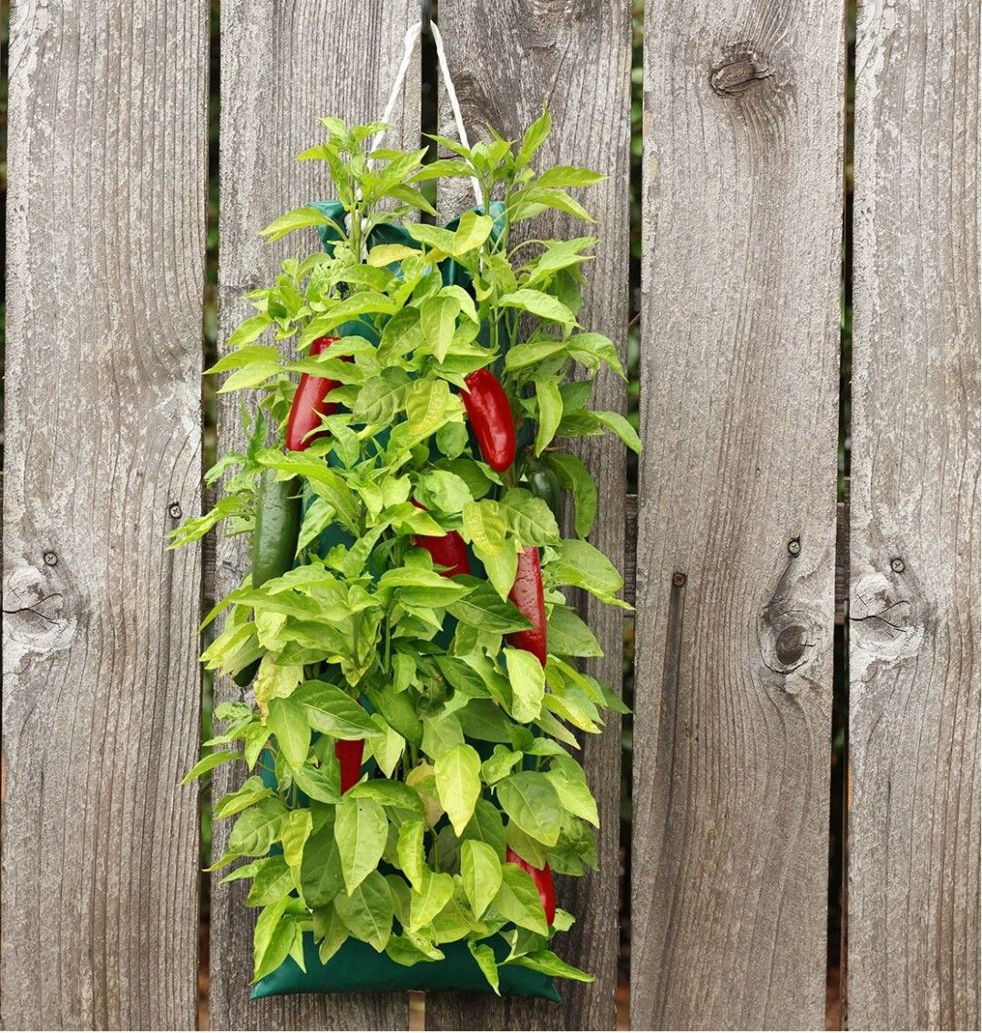 Wayfair Hanging Garden Aldi is set to abide its accomplishment of