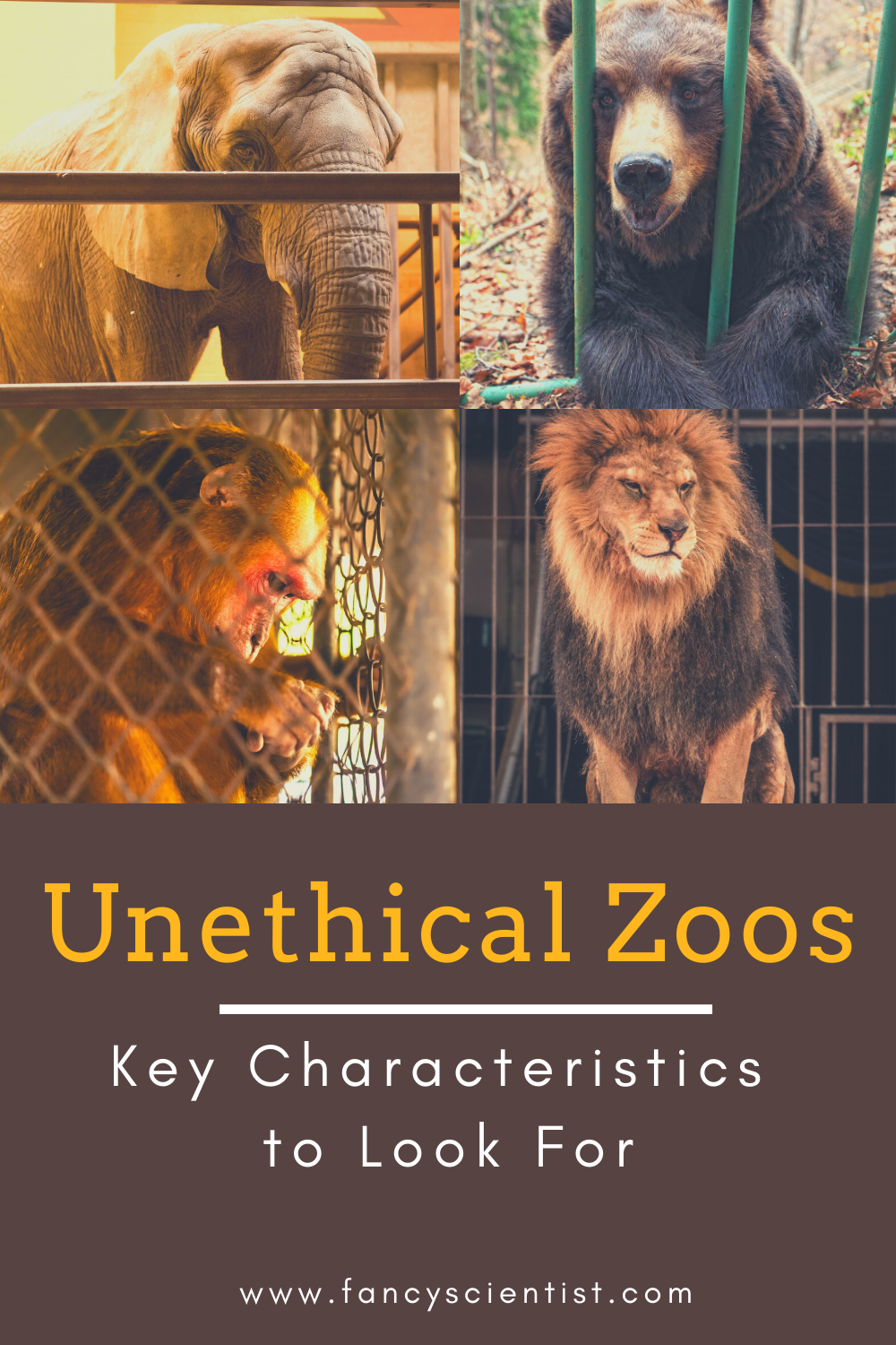 Unethical Zoos What Should You Look For Animal Conservation Wildlife Conservation Wildlife Biologist