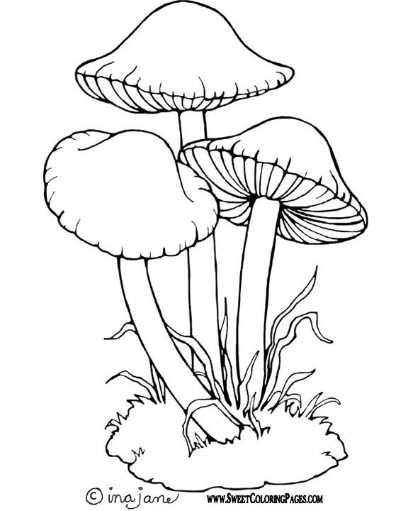 mushroom coloring page - google search mushrooms