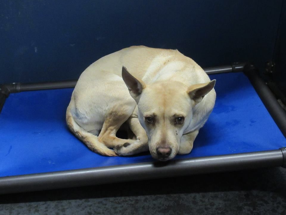 17++ Silver creek animal clinic images