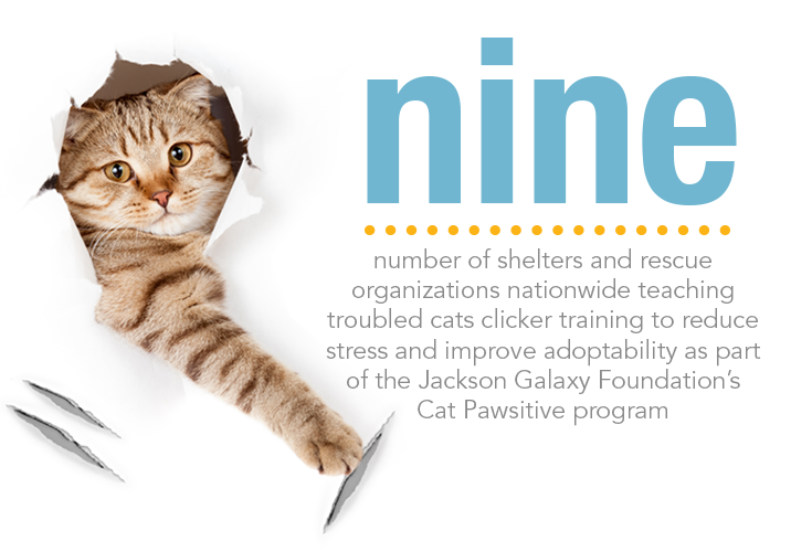 Nine Shelter And Rescue Organizations Are Using Clicker Training To Help Troubled Cats Pet Insurance For Dogs Pets Vet Bills