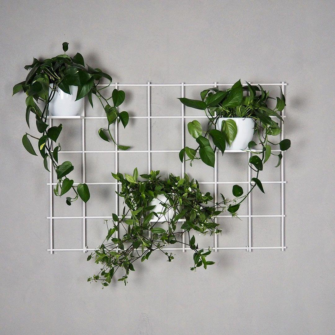 welcome to the jungle hach herrlich ein paar pflanzen an. Black Bedroom Furniture Sets. Home Design Ideas