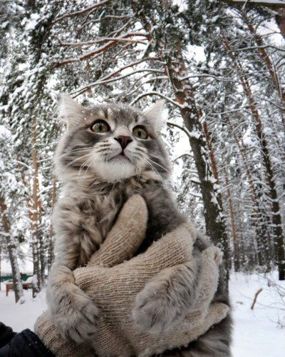 How Does Russia Have All This Adorableness Beautiful Cats Pretty Cats Cat Pics
