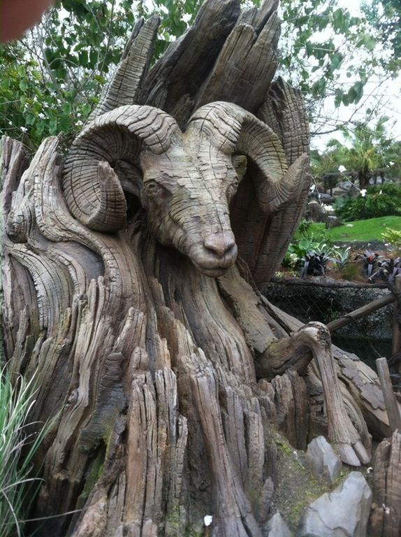Beautifully carved ram's head emerging from this old tree trunk. : pics