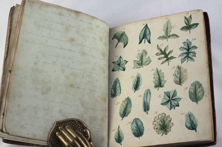 Michaelmoonsbookshop Sketch Book Book Art Botanical Art