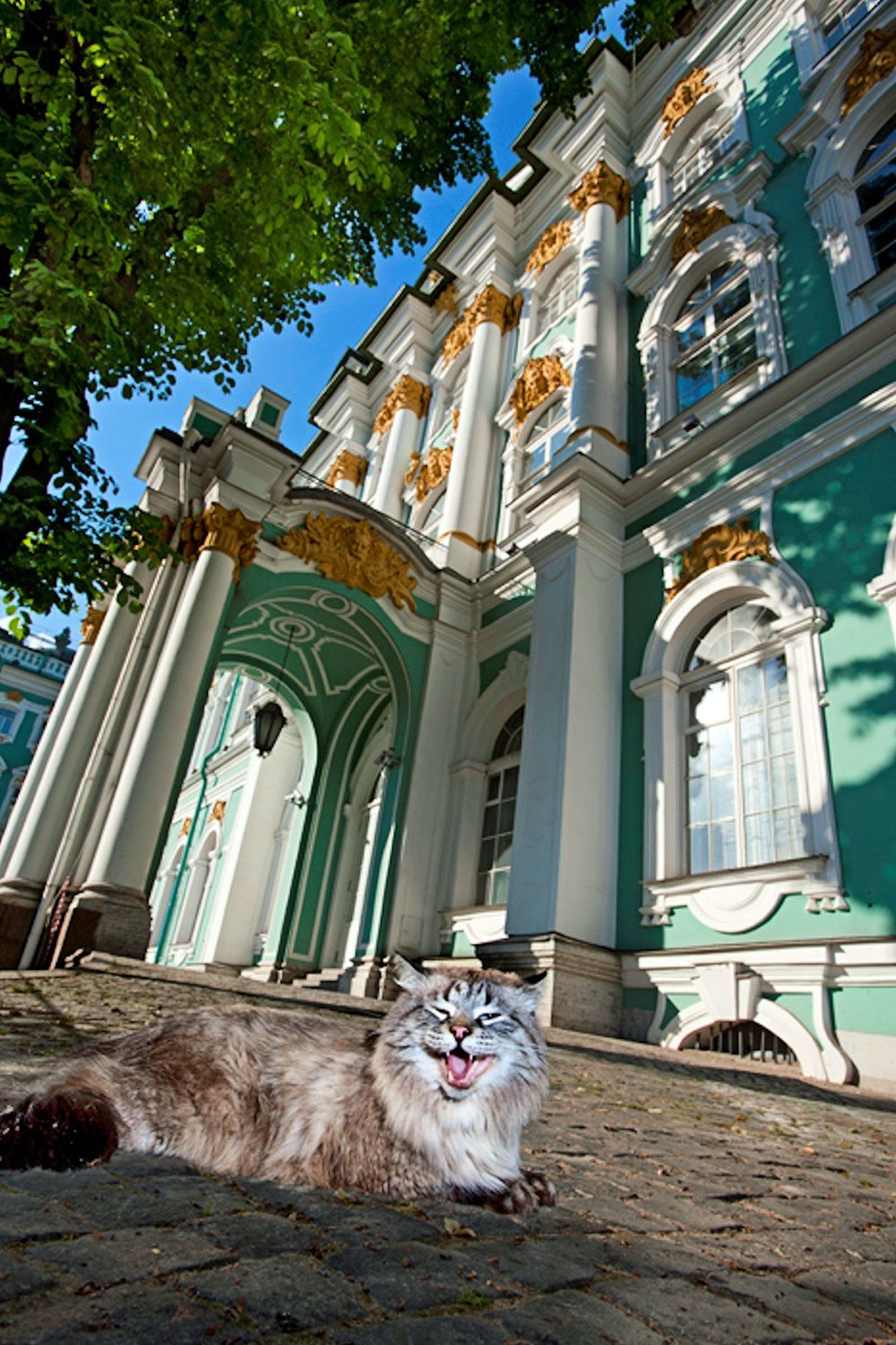 Posts about Hermitage Museum on Voices from Russia Cats