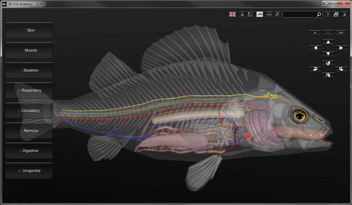 3D Fish Anatomy Software | SLC Ideas/In progress | Pinterest | Fish ...