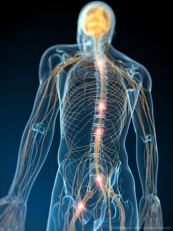 Image Detail For Human Nervous System Computer Artwork The