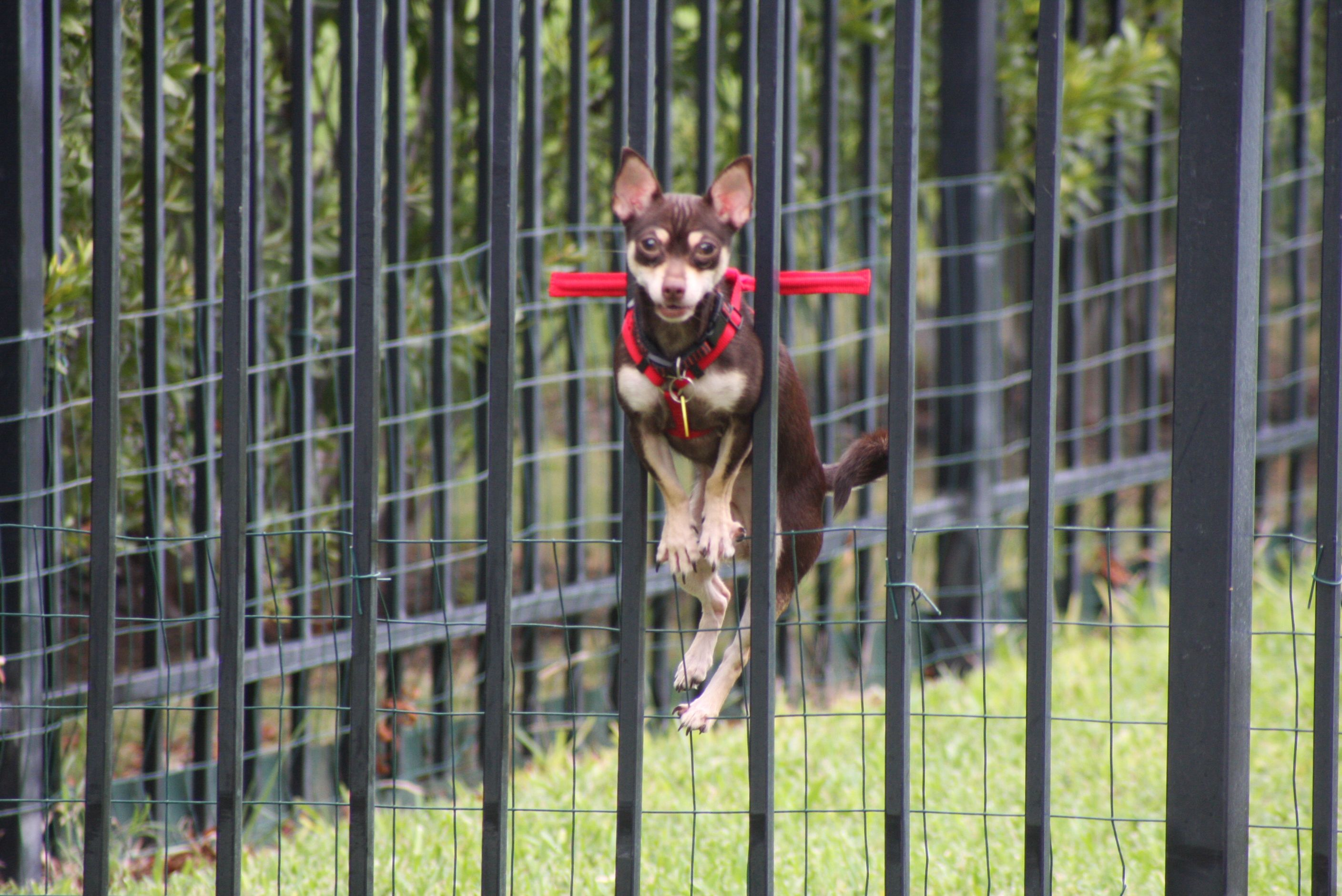 The Safe Behind Bars Dog Harness Keeps Your Small Dog From