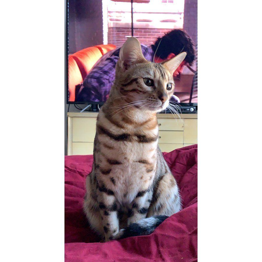 cats cat catsofinstagram cats_of_instagram catsagram