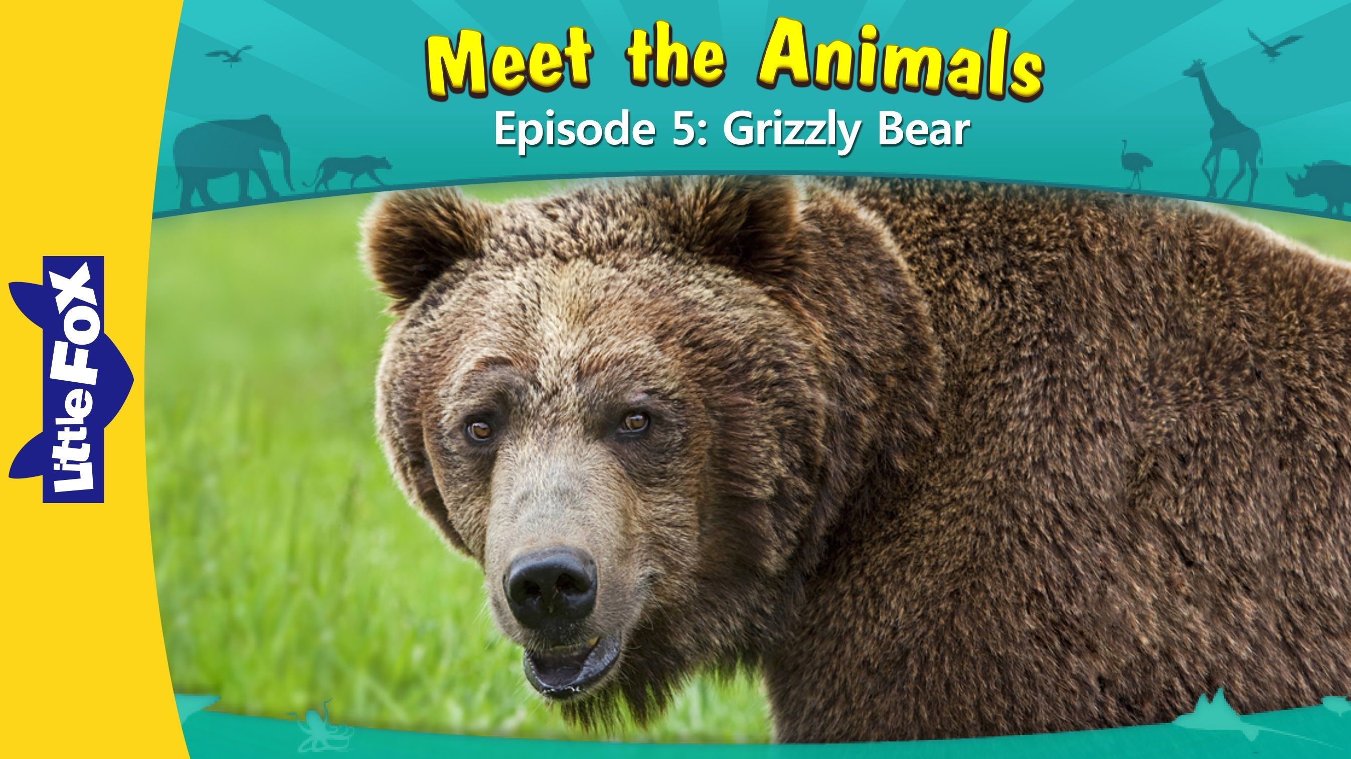 Meet The Animals 5 Grizzly Bear