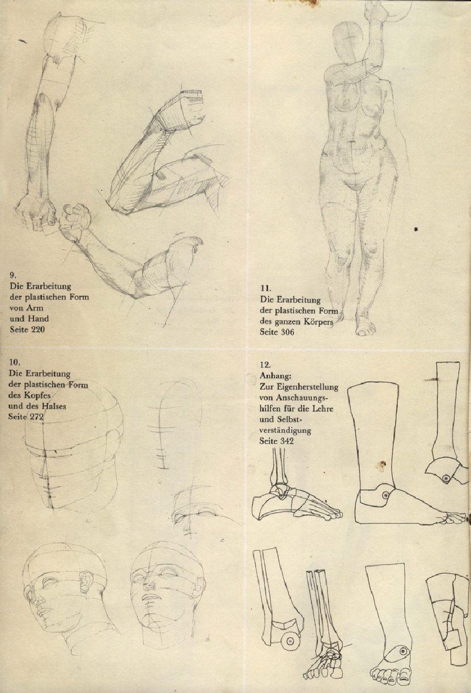Ausgezeichnet Anhang Anatomie Bilder - Menschliche Anatomie Bilder ...