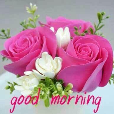 Pin By Esha On Good Morning Good Morning Flowers Good Morning Roses Good Morning Beautiful