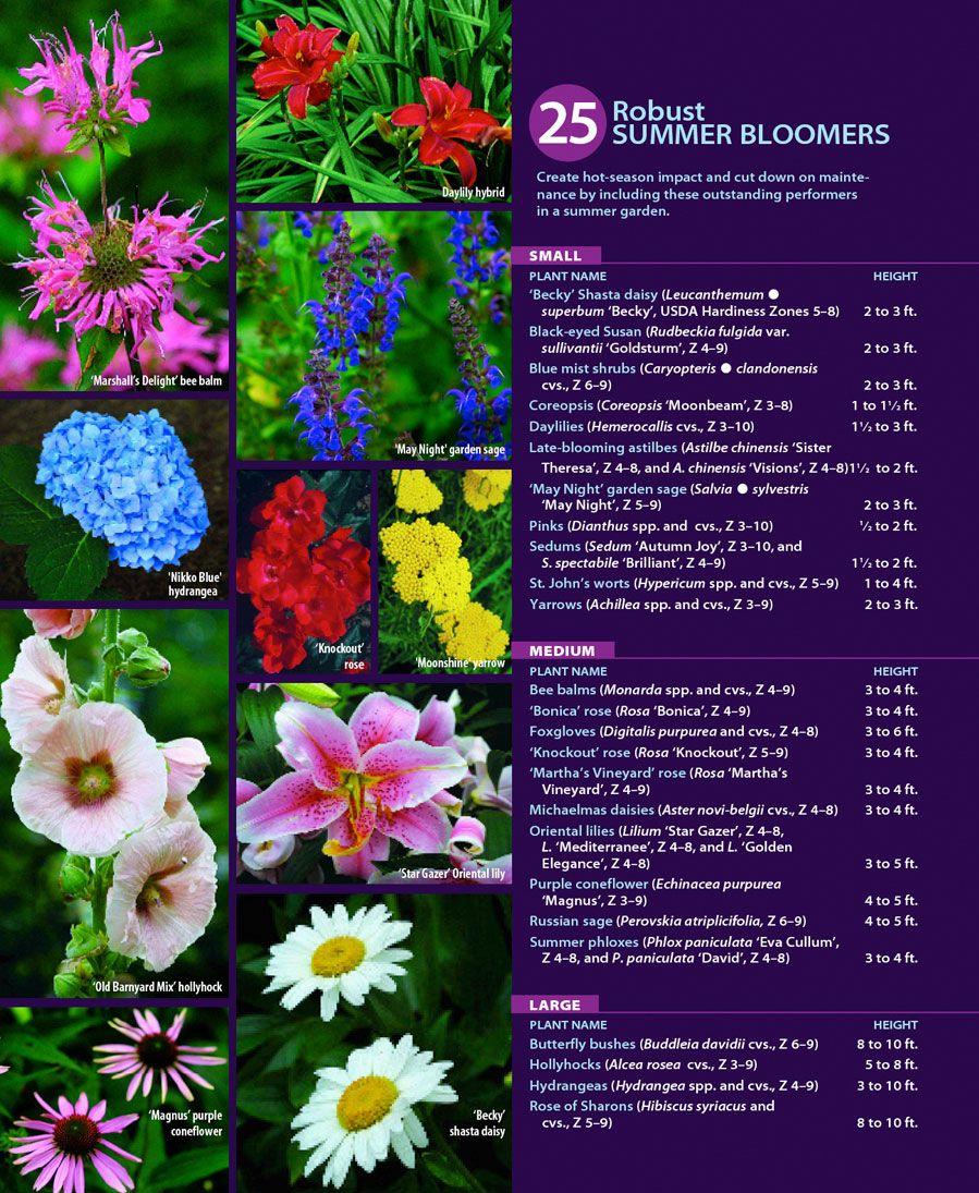 25 Robust Summer Bloomers Plants Fine Gardening Summer