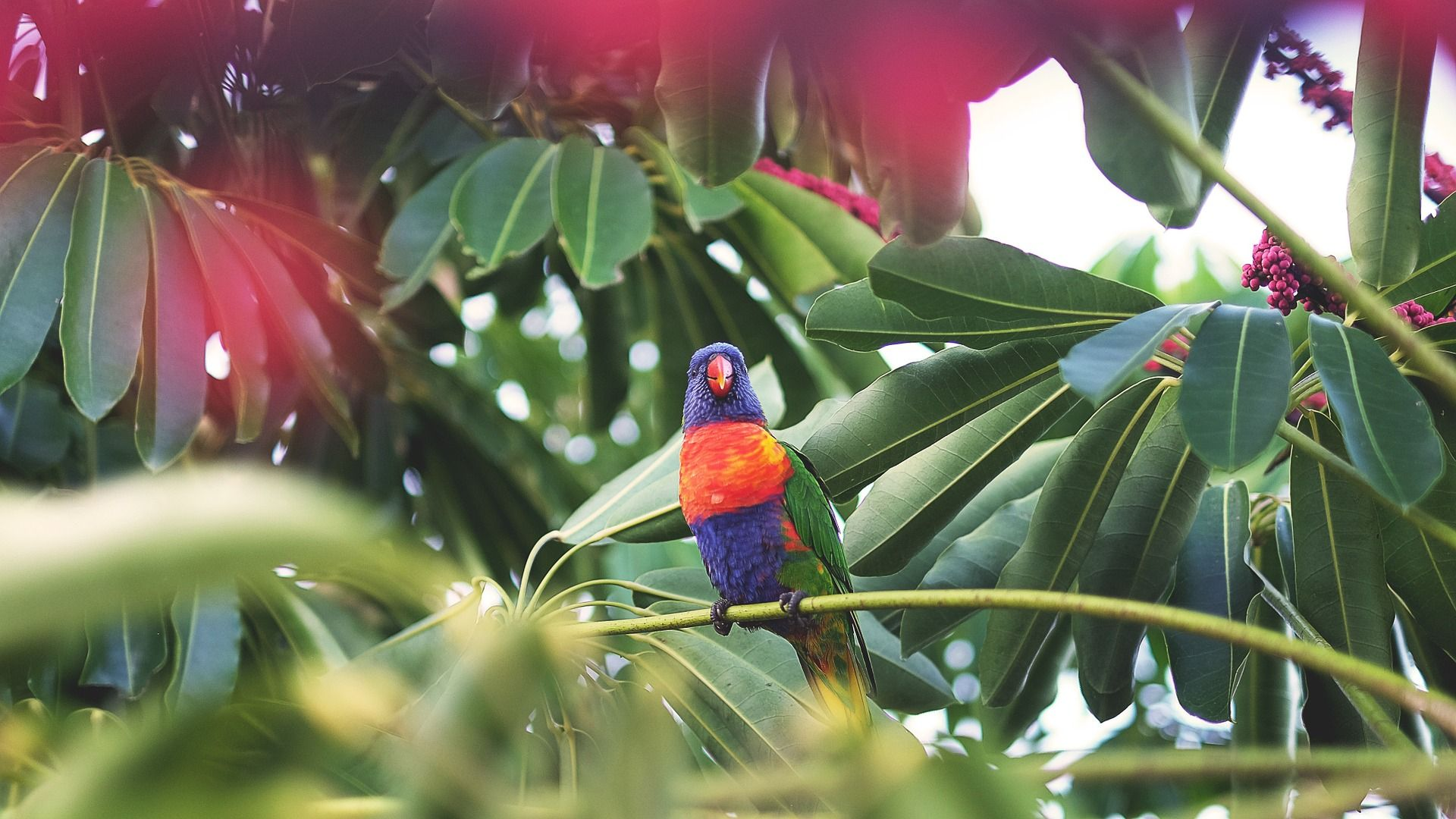 Colourful parrot in a jungle