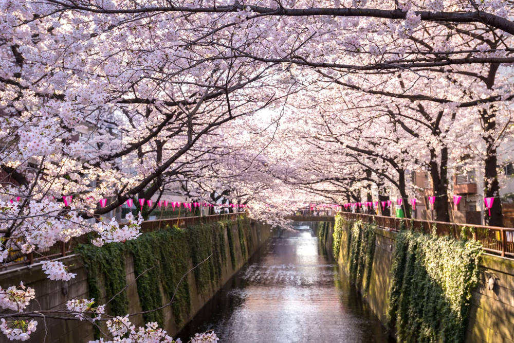 From Tokyo To Washington D C This Virtual Tour Lets You Visit Famous Cherry Blossom Sites Around The World Cherry Blossom Japan Japan Travel Best Places To Travel