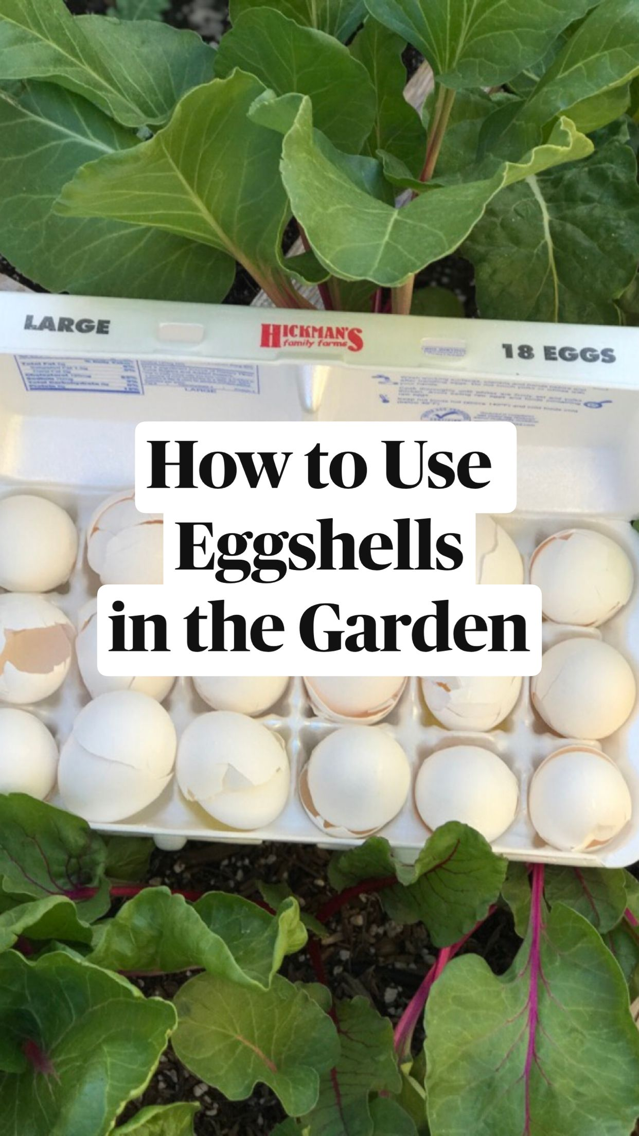 How to Use Eggshells in the Garden