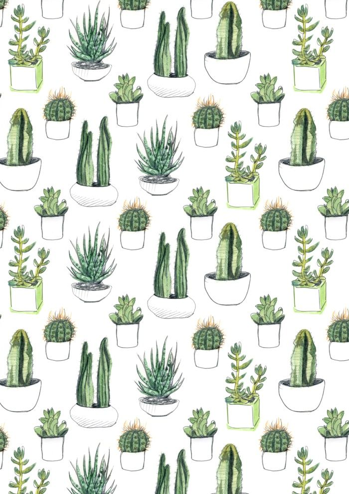 Watercolour drawings of cacti and succulents arranged in a