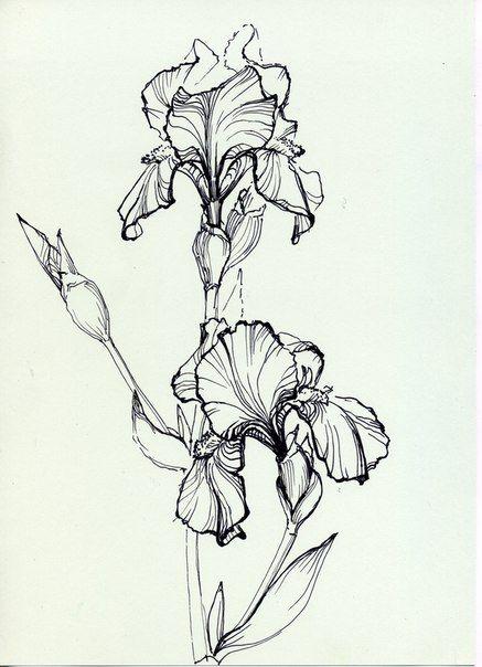 Pyatnica Razvlekushki Fyu Fyu Flower Sketches Flower Drawing Iris Flowers